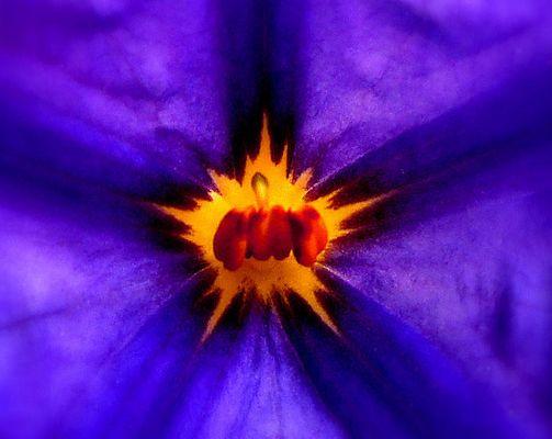 still my flower