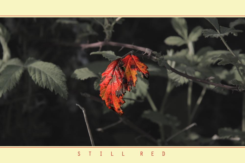 Still Red