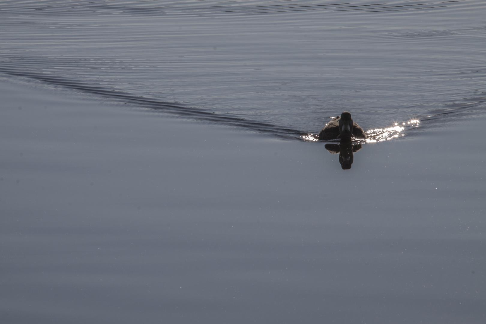 still ruhte der See