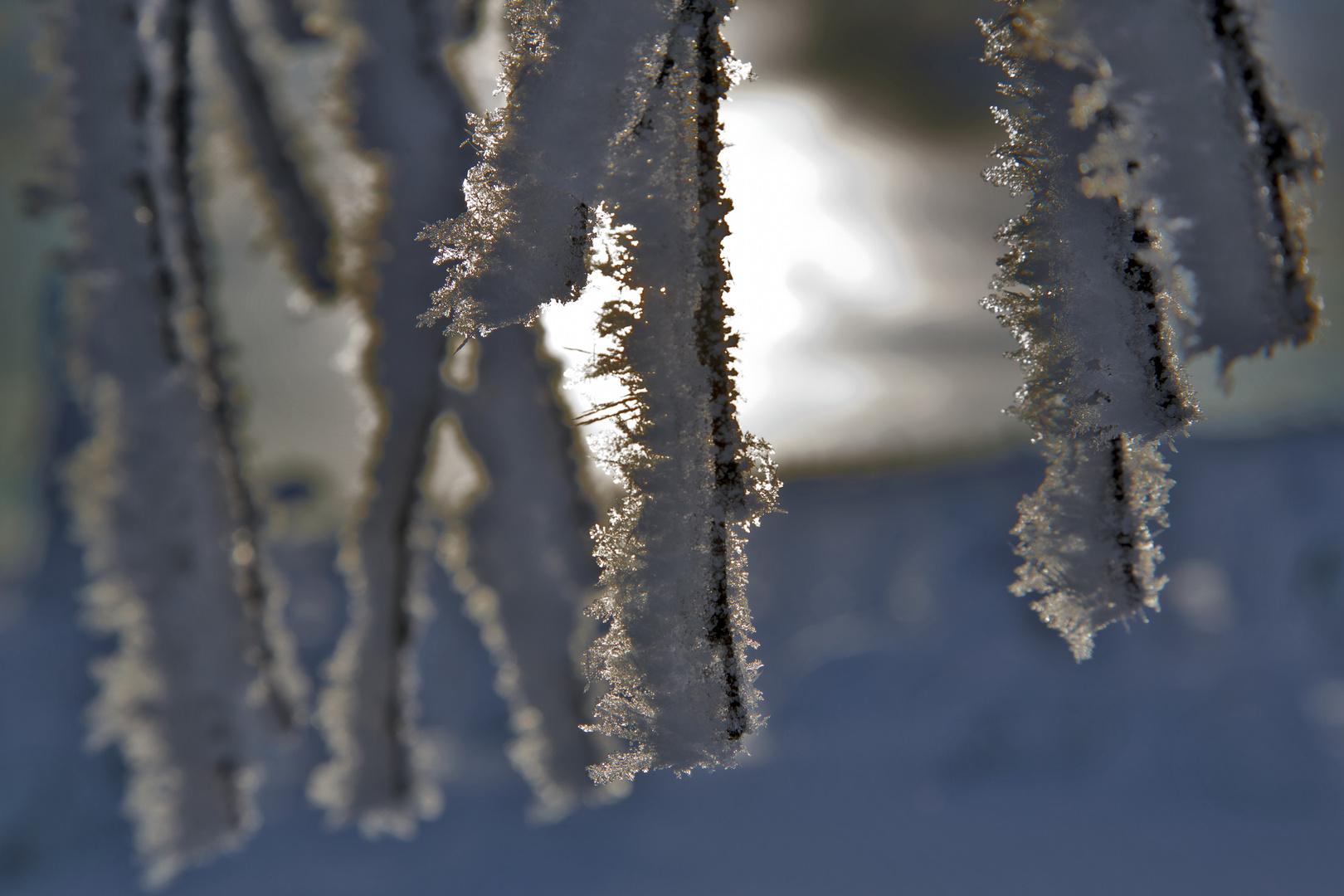 Still und schön...wie Blumen aus Eis...