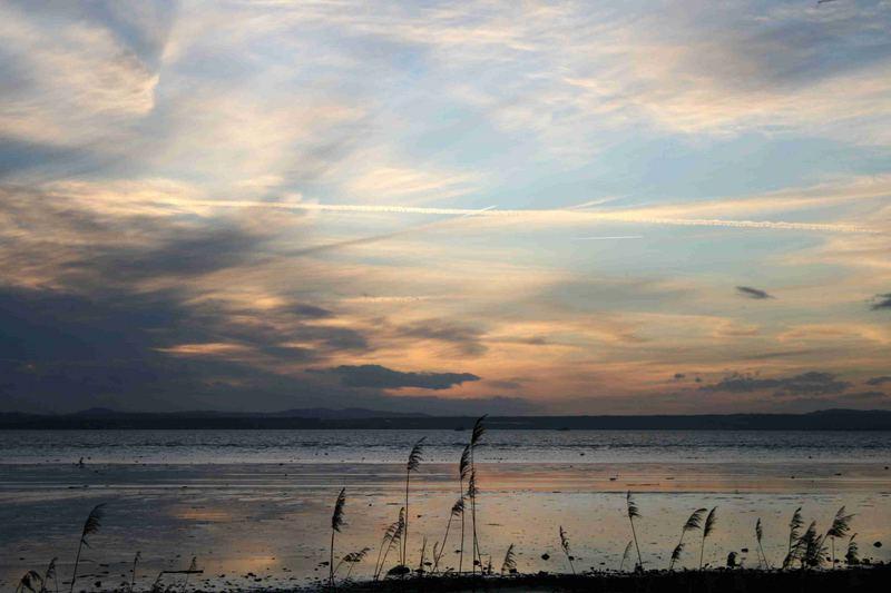Stille am Abend (Naturschutzgebiet Bodensee)