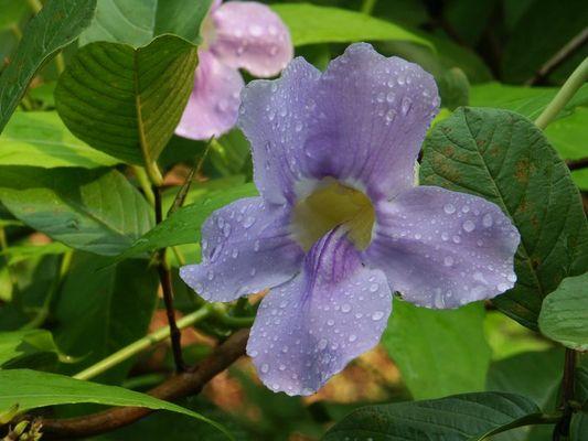 stille Blüte