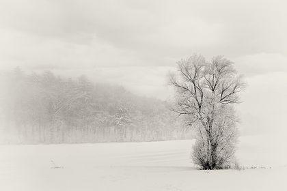monochrome Winterlandschaft