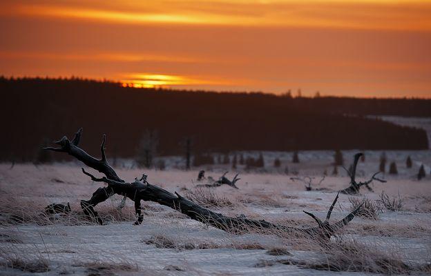Stille im Moor