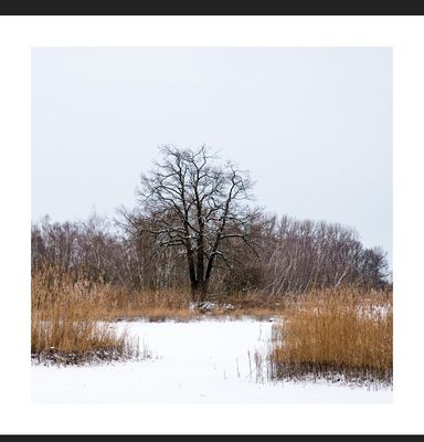 Stille im Winter