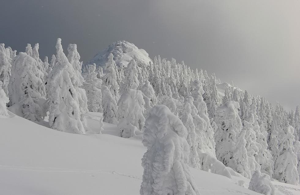 Stille, kalte Winterwelt