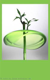 Stilleben: Foto I: Bambus