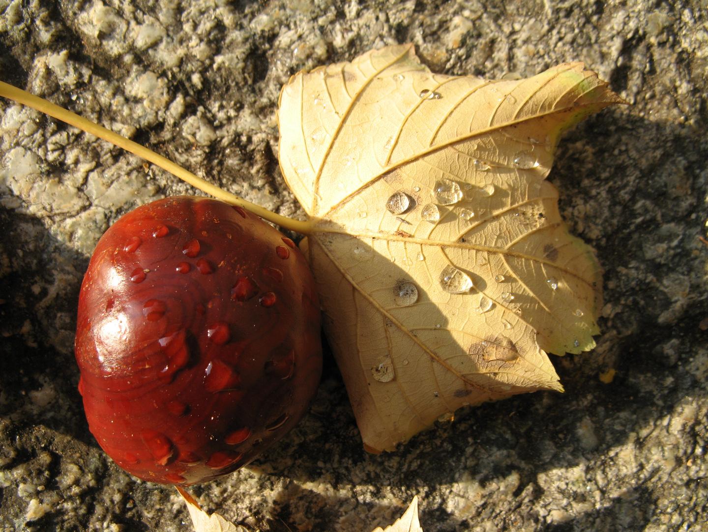 Stilleben Herbst