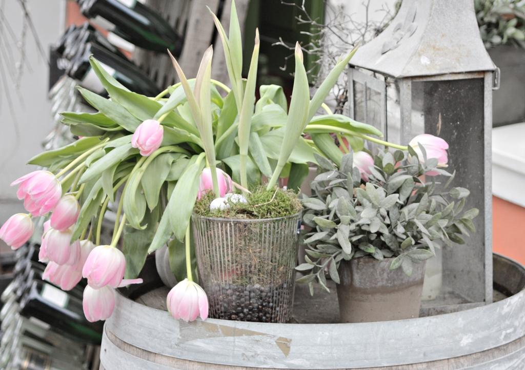 Stilleben im Frühling
