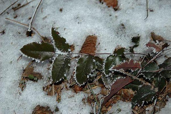 Stilleben im Schnee