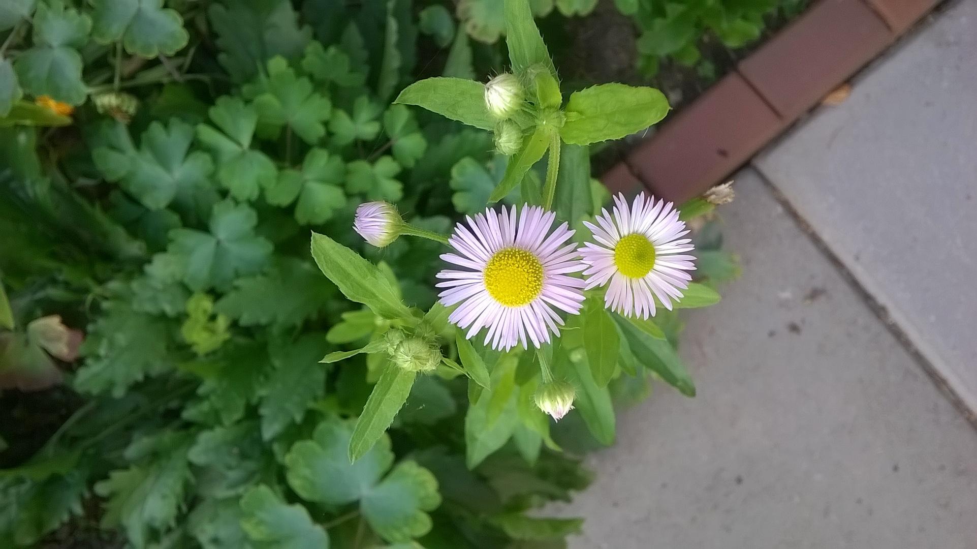 Stilleben in Blüet und Knospe
