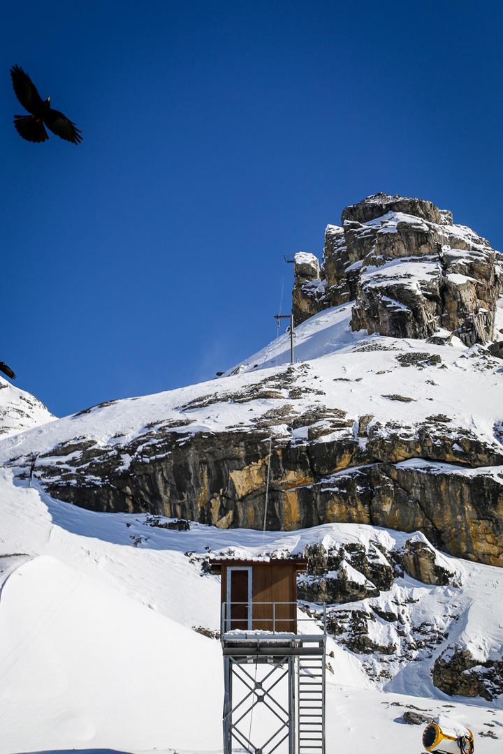 Stilleben mit Schneekanone und Bergdohle