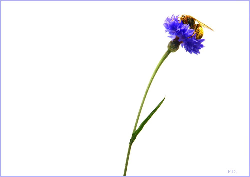 Stilleben mit Wespe