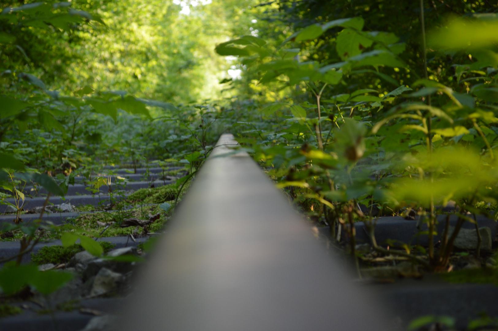 Stillgelegte Gleise von der Natur eingenommen