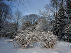 Stillleben im Schnee