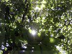 Stillleben in grün