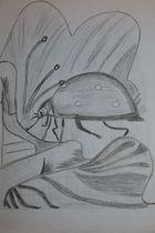 Stillleben Käfer