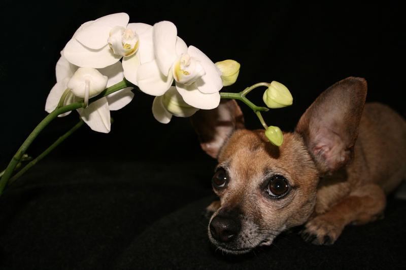 Stillleben mit Hund (2)