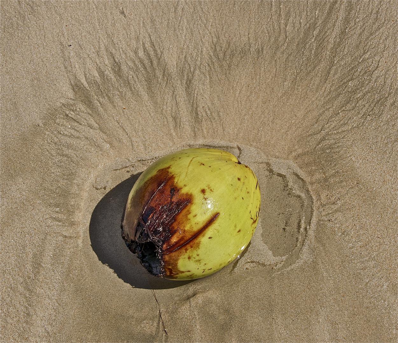 stillleben mit kokosnuß
