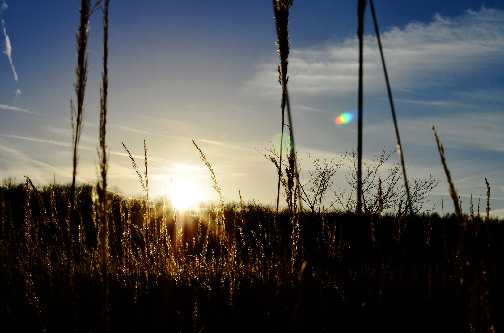 Stimmige Wintersonne am frühen Abend.