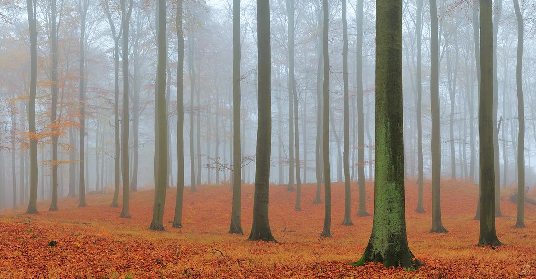 Stimmungsvoller Herbst