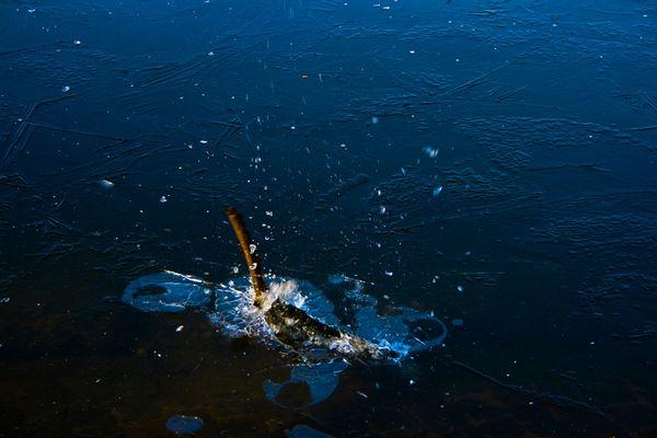 Stock im Wasser