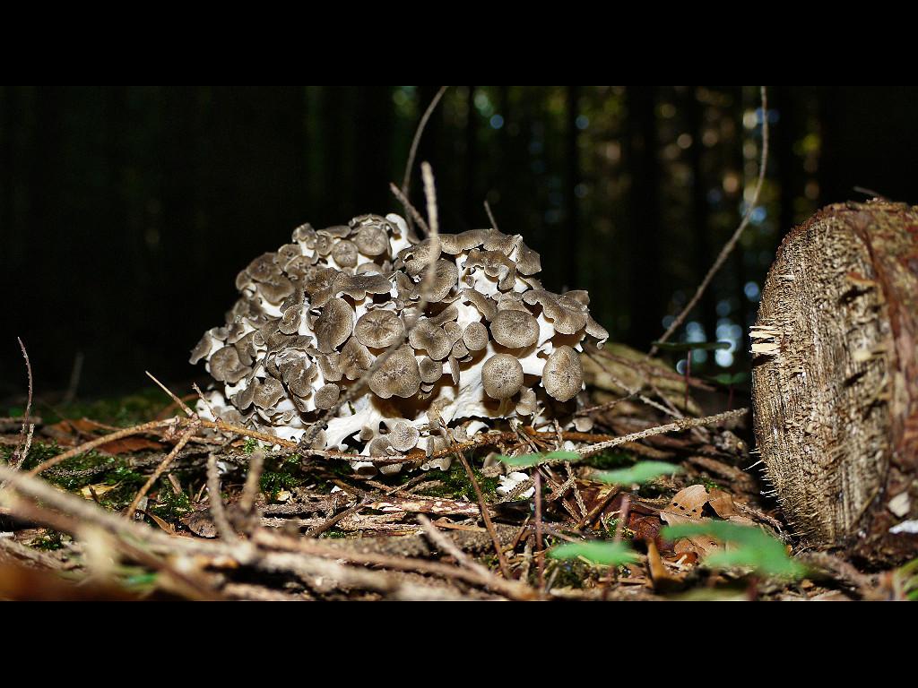 Stockfest der Pilze