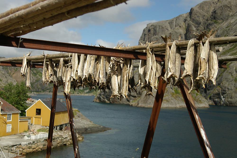 Stockfisch in Nusfjord