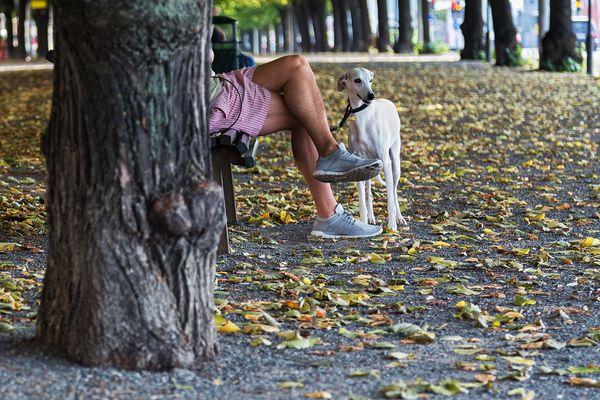 Stockholm - Hund & Herrchen