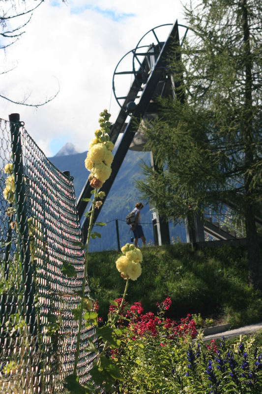 Stockrosen, Phlox und Glockenblumen....