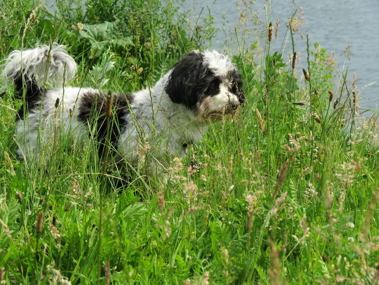 Stöbern im Gras