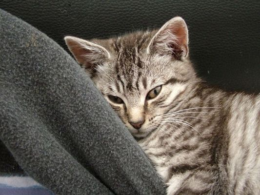 Störst Du mich beim Schlafen?