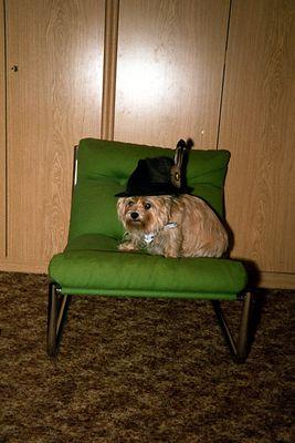 Stoibers Hund