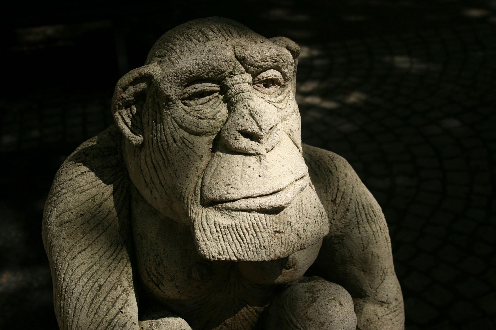 Stoischer Affe