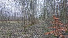 Stolper Heide (3D)