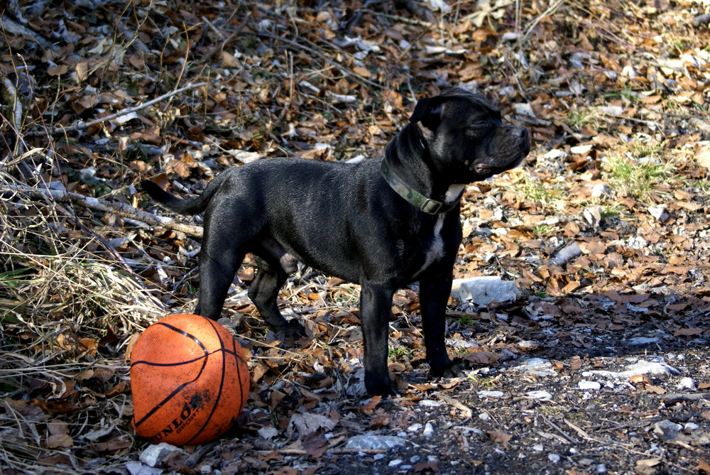 Stolz ein Basketball zerstörer zu sein :-)))