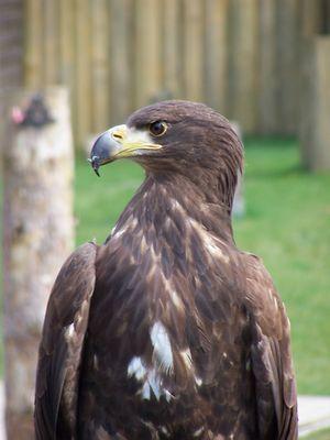 Stolz wie Adler 2