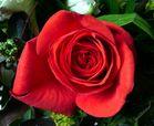 Stolz wie eine Rose!