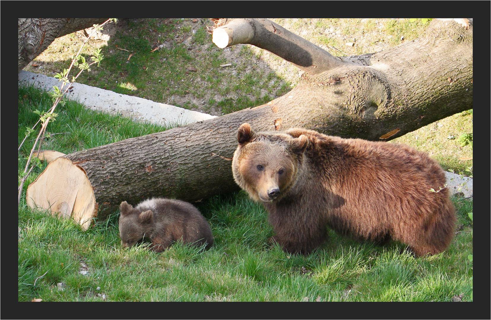 Stolze Bärenmutter
