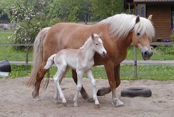 Stolze Mama und ein Mädel mit Pfeffer im Ars..