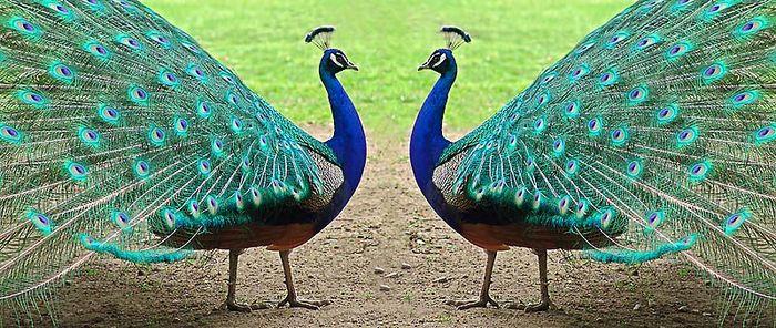 Stolze Zwillinge