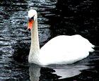stolzer Bewohner unserer Gewässer