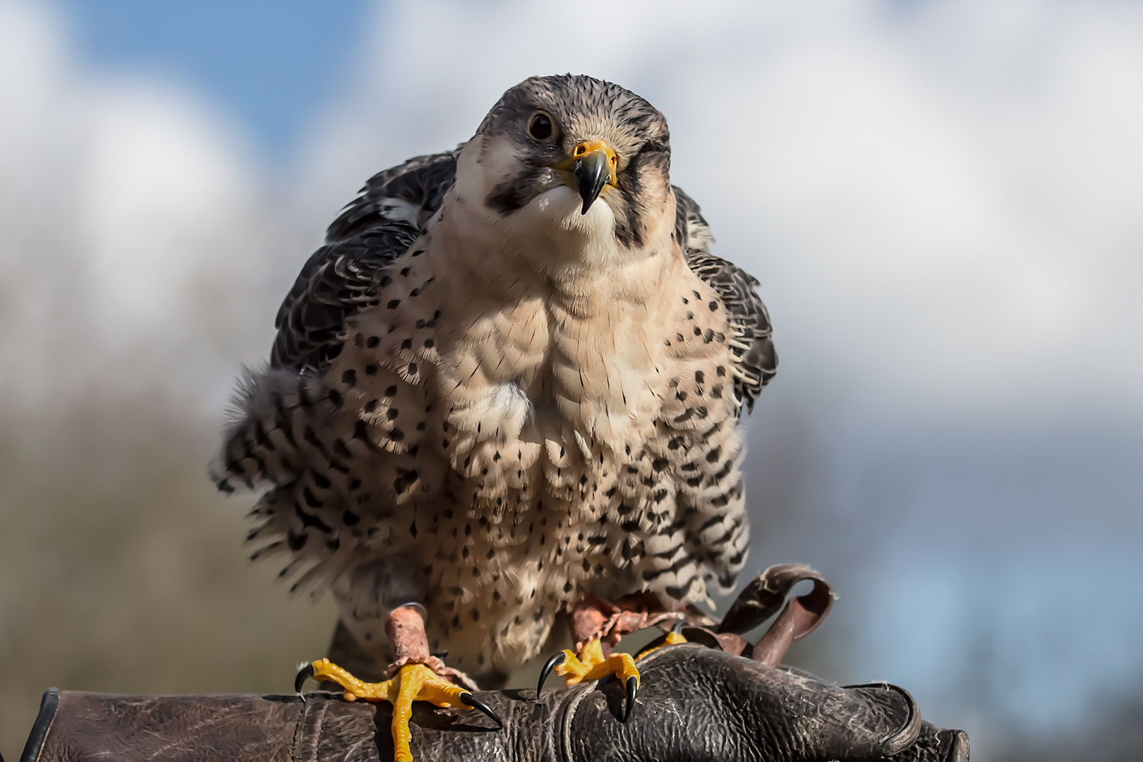 Stolzer Vogel
