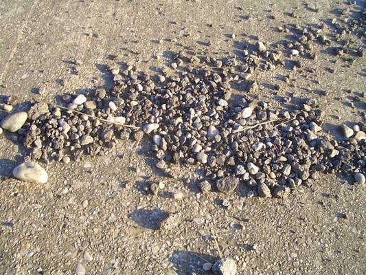 Stones in the wild