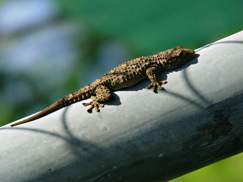 Stop, Gecko!