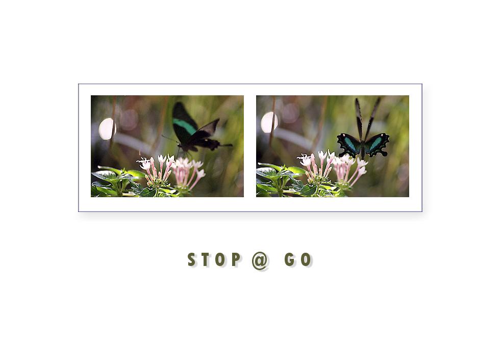 stop @ go