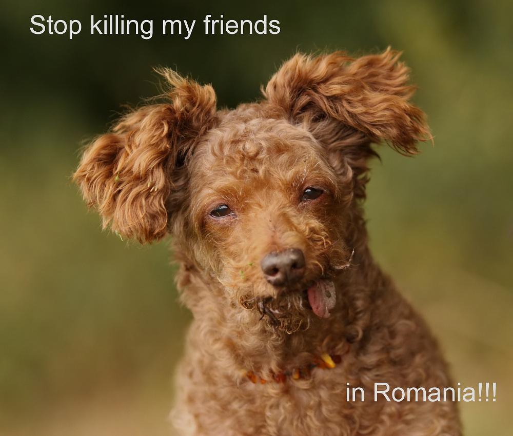 Stop killing my friends in Romania!