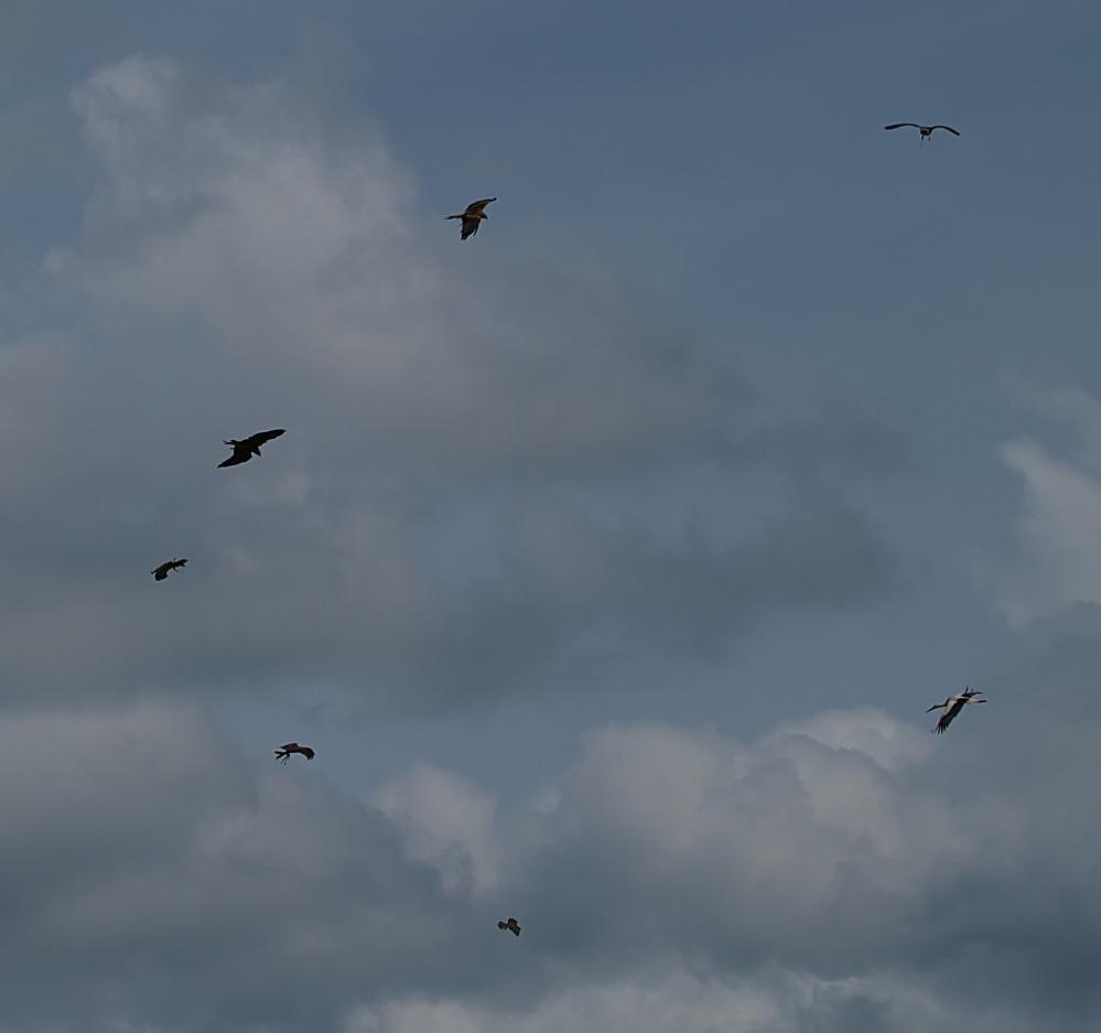 Stopp ! Superlative !!7 Vögel gleichzeitig in der Flugshow !!!