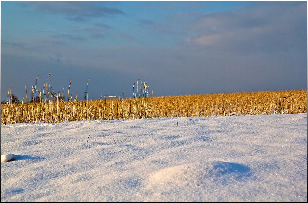 Stoppelfeld im Schnee