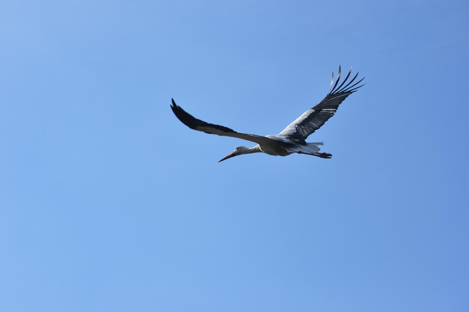 Storch Abflug